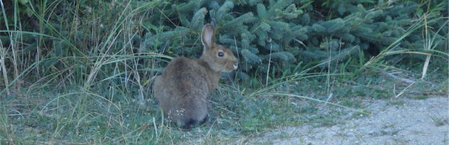 Bunny poses for Bailey's enjoyment