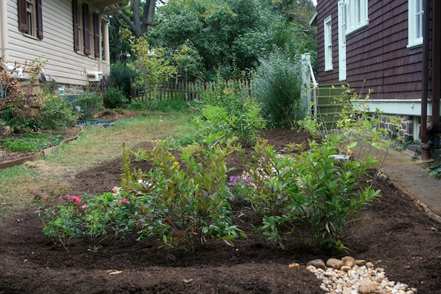 A rain garden, like this one in Baltimore, Maryland, is a shallow depression planted with deep-rooted native plants and grasses and positioned near a runoff source to slow and absorb storm water - photo: bluewaterbaltimore.org