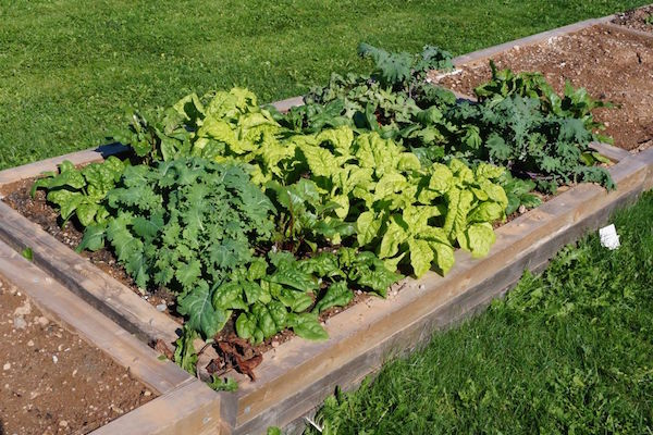 A raised bed built by Len Vassallo and volunteers at the CBU Community Garden - photo: Tim Rawlings